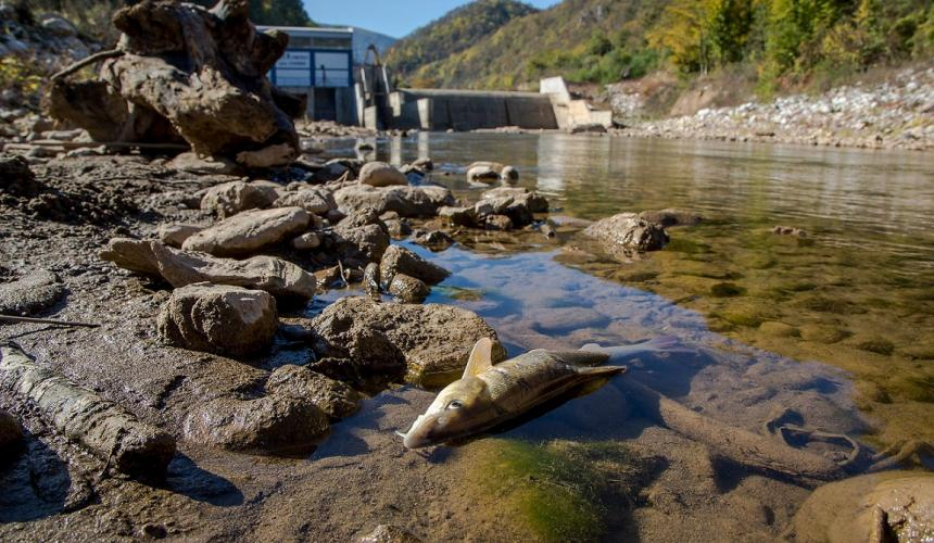 Wasserkraftwerke, v.a. Kleinwasserkraftwerke sind eine der wesentlichen Ursachen für die immer länger werdenden Roten Listen bei den Fischen. Wird der Ausbau nicht gestoppt, würden in den Flüssen des Mittelmeerraumes 186 Fischarten weiter Richtung Aussterben gedrückt werden. © Amel Emric