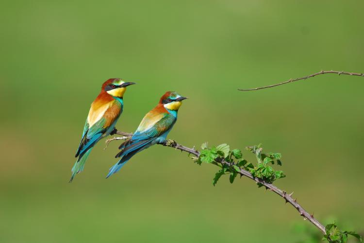 The bee-eater would benefit from restored river banks. © A. Vorauer