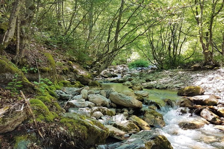 The Ribnicka is one of many small rivers in the Mavrovo National Park. The construction of the power plants and the necessary infrastructure would have fatal consequences for the species-rich area in North Macedonia. © Front 21/42