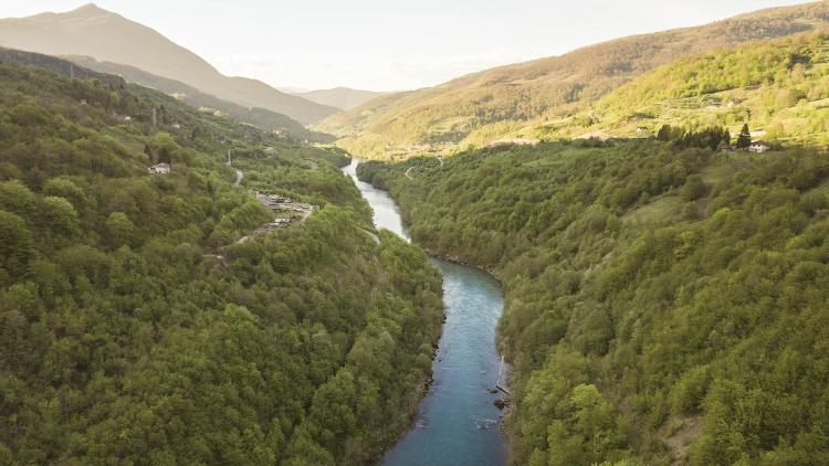 The Drina is the most important lifeline for the endangered Huchen (Hucho hucho). The species is particularly vulnerable to dam construction © Matic Oblak