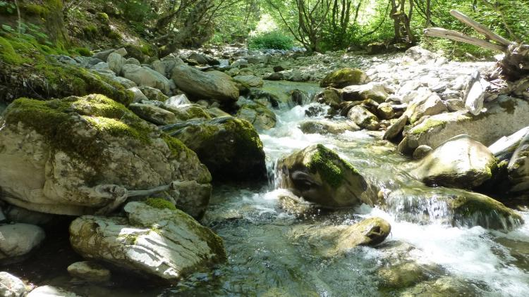 Streams like this would be destroyed by HP projects inside Mavrovo NP © Theresa Schiller
