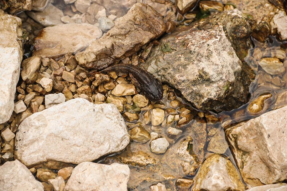Dead fish in the dry riverbed © Viktor Bjelic