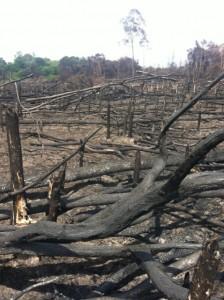 Auch dieser Regenwald auf Borneo musste den Palmölplantagen weichen