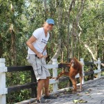 My first encounter with a semi-wild orang-utan in the national park