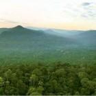 So muss es bleiben: Regenwald bis zum Horizont  Foto: Luke Duggleby