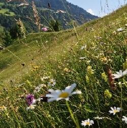 Magerwiese Vorarlberg. Foto: http://www.rettet-die-blumenwiesen.at/