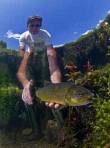 Ein Biologe entlässt die seltene Weichmaulforelle im Fluss Vrljika nach ihrer Markierung. Foto: Arne Hodalic