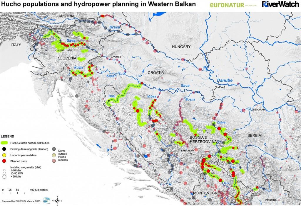 Oase für Huchen: Am Balkan gibt es die besten Huchenbestände Europas. Zählt man die Flussstrecken zusammen, in denen Huchen leben, kommt man auf 1.842km. Staudammgefahr: 93 Wasserkraftwerke sind direkt in Huchengewässern geplant. 70% der Huchenbestände am Balkan würden dadurch verloren gehen.