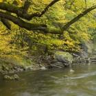Flussabschnitt mit Wildnis-Charakter oberhalb der Stauwurzel des alten KW Rosenburg. Das Ufer im Bereich des Oberwassers beim Öden Schloss würde im erweiterten Stausee versinken (2,5 Meter Erhöhung gepant).  (c) Matthias Schickhofer