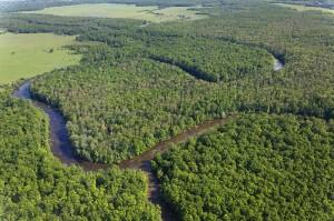Der beste Schutz gegen Hochwasser: intakte Auwälder an der Save © Goran Safarek